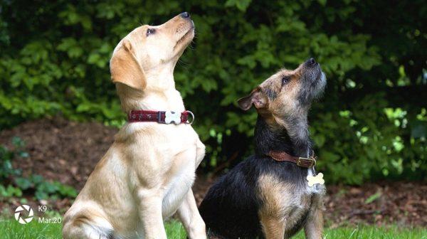 2匹の犬の写真